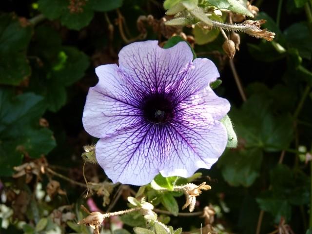 Metz en fleurs 9 mp1357 2011