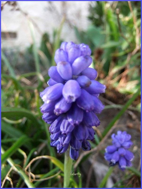 Le printemps s'installe au jardin....