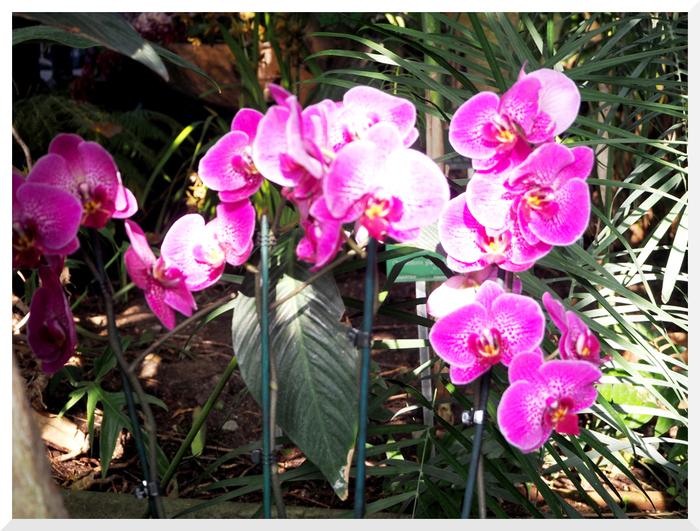 Mille & Une Orchidées. Jardin des Plantes. Paris.