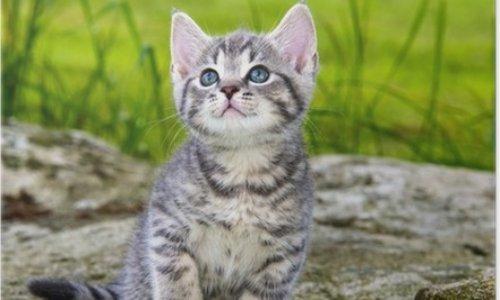 Peine de prison ferme pour l'individu ayant assassiné un chat dans un jardin public à Limoges