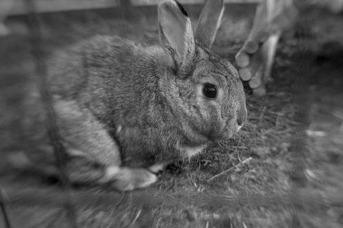 19 - Les lapins suite