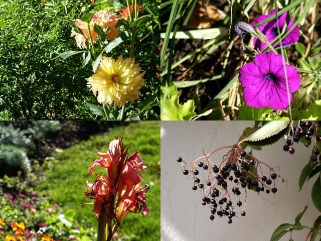 Parcs et jardins de Metz 5 mp1357 2010