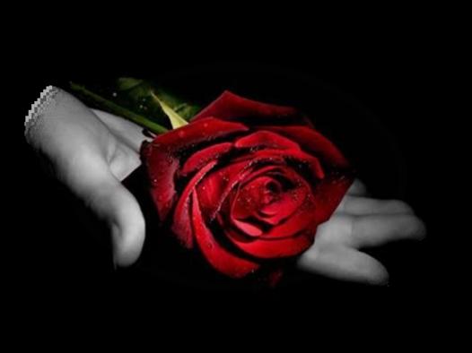 Une Rose par jour
