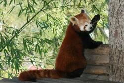 Index des animaux de Pairi Daiza
