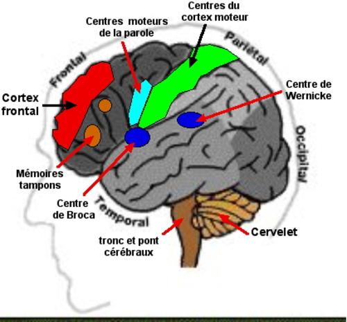Quand l'œil lit, le cerveau écrit à la main; mais tape t'il sur un clavier ?