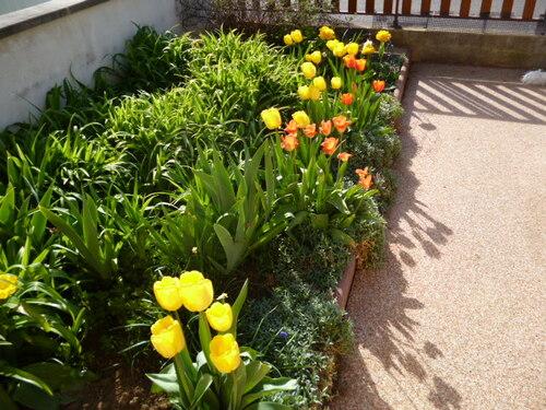Toujours le printemps au jardin
