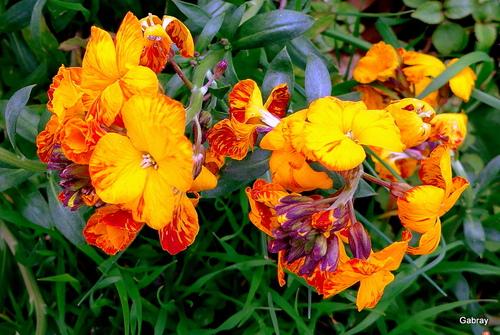 Mon jardin fin mars : des fleurs!