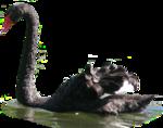 PNG képek: Állatok (madarak, szárnyasok)