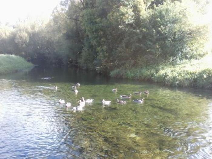 de bien jolis petits canards