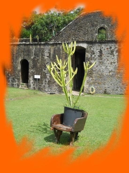 cactus rédduit 2