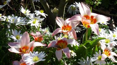 Le printemps chante