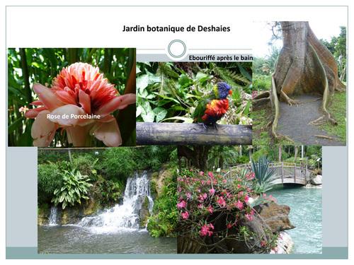 10 jours sur Basse-Terre en Guadeloupe