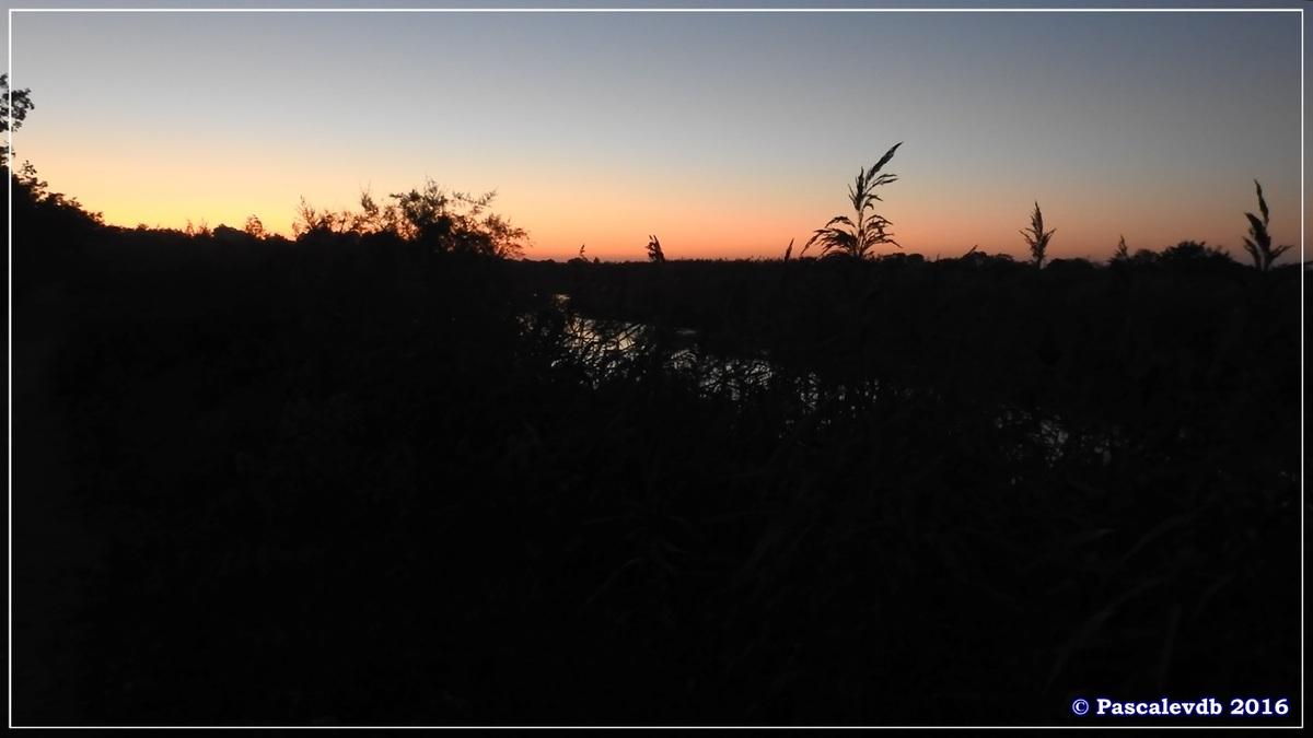 Réserve ornitho du Teich - Octobre 2016 - 11/11