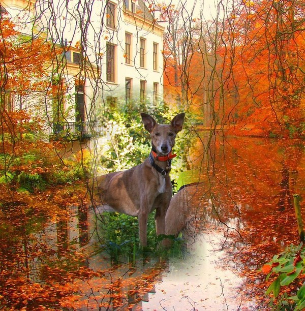 pod'automne