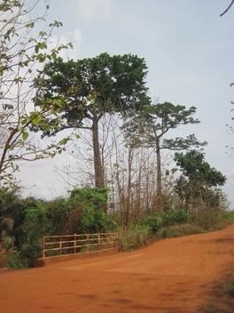 178 Togo piste vers le Bénin
