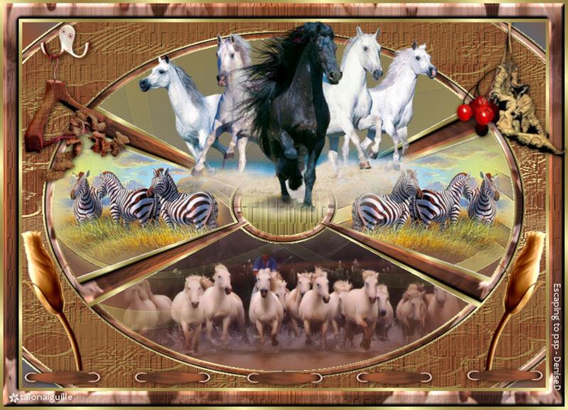 *** Christmas 2018 (rebaptisé Wild horses and zebras)