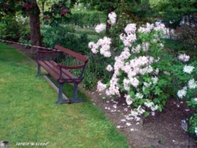 Apremont---rhododendron-azalee.jpg