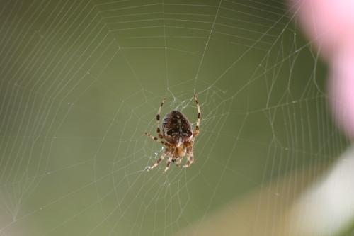 J'aime l'araignée