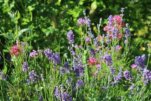 Esprit du jardin en ce début juin