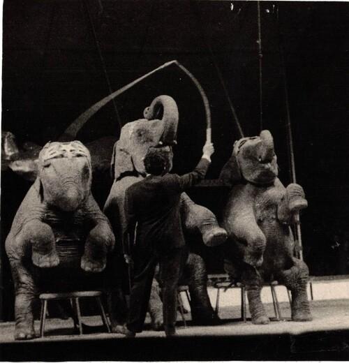 Jean Richard présentant en 1957 les éléphants du cirque-zoo Jean Richard ( direction Gruss-Jeannet)