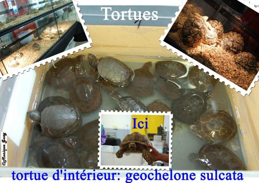 tortues-1