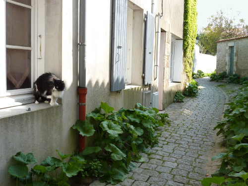 Saint-Martin ruelle au chat 2