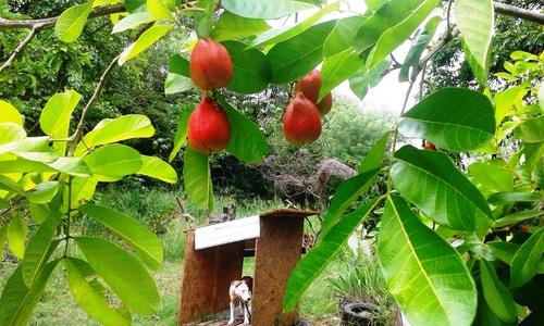 Village d'antan Martinique 2