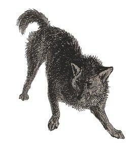 (Fuegian Dog): drôle de chien !
