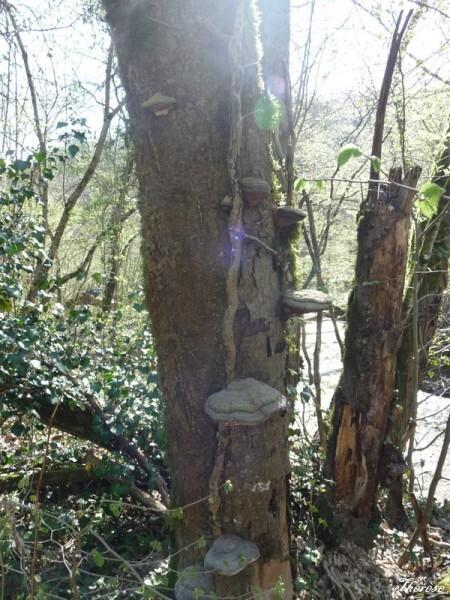 Troncs d'arbres (2)