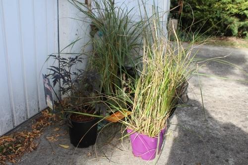 Dernière fête des plantes de l'année