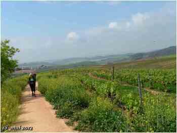 (J44) Los Arcos / Ayegui 18 mai 2012