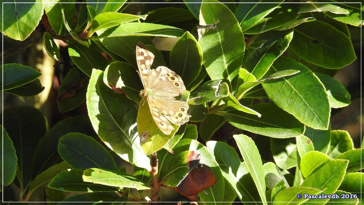 Réserve ornitho du Teich - Octobre 2016 - 6/11