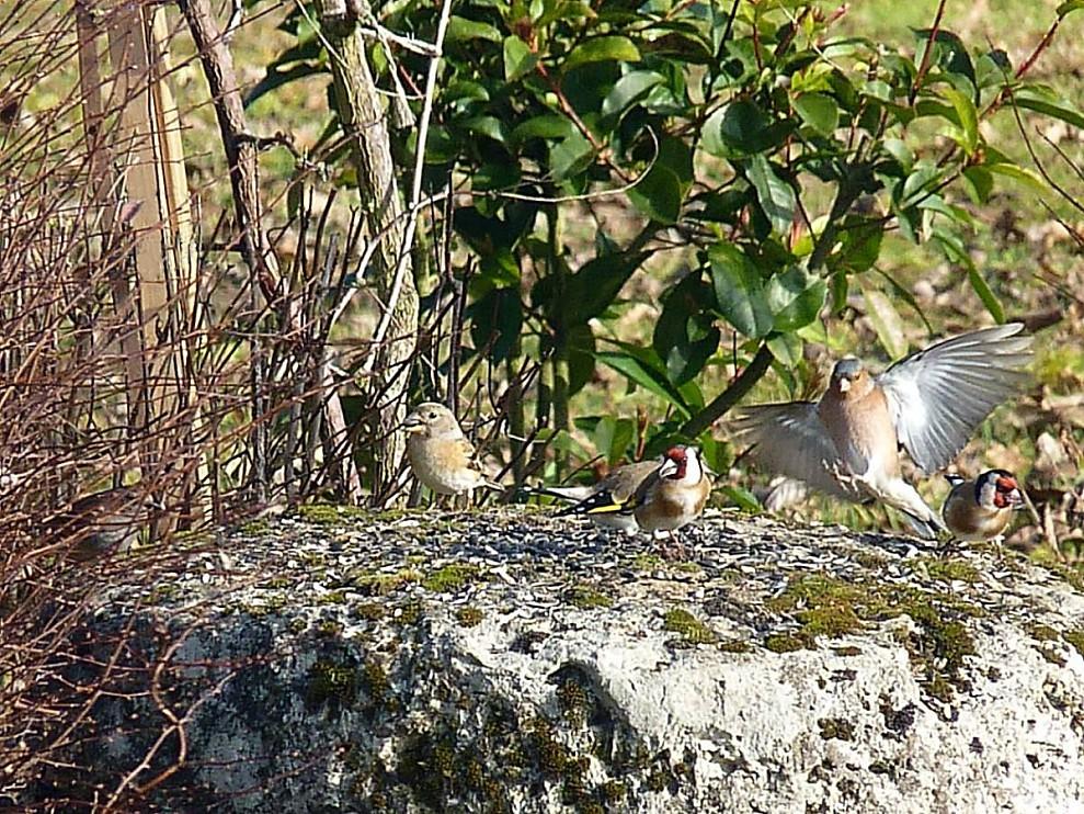 oiseaux-sur-meule.jpg