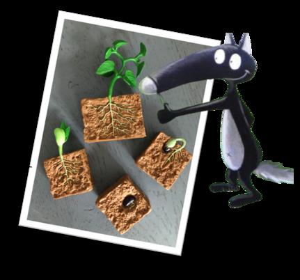 La germination