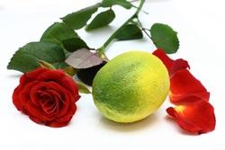 Fillette 4 : Rose- citron.