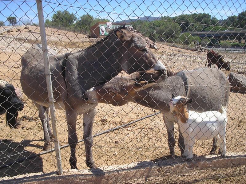 Les animaux du zoo de Fréjus