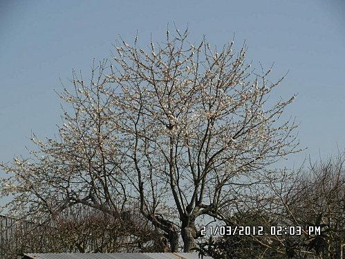 arbre-en-face-006.JPG