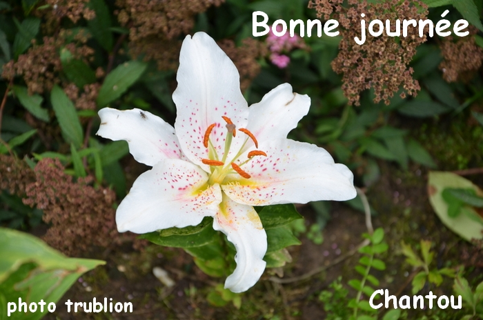 CHANTOUVIVELAVIE : BONJOUR - MARDI 29 09 2020