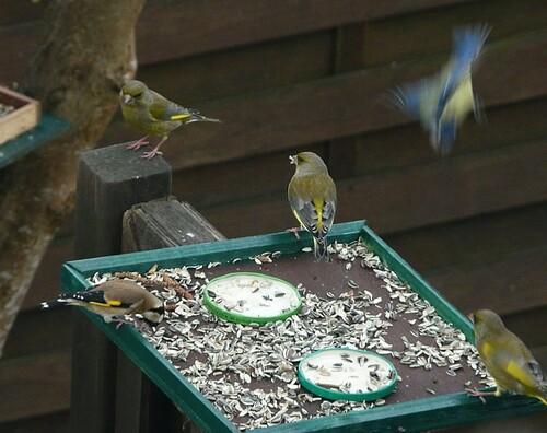 repas des oiseaux du jardin