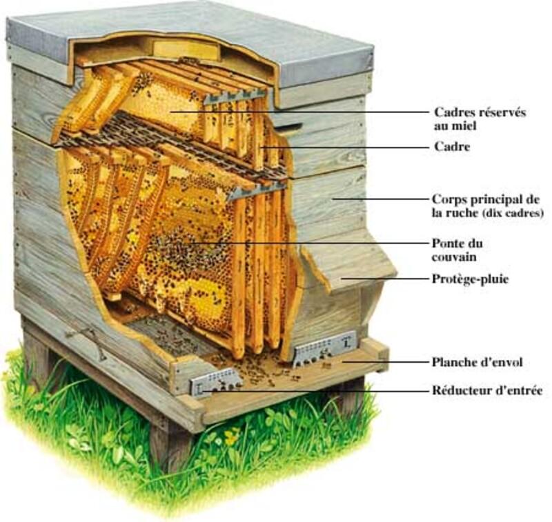 Les vertus du miel.