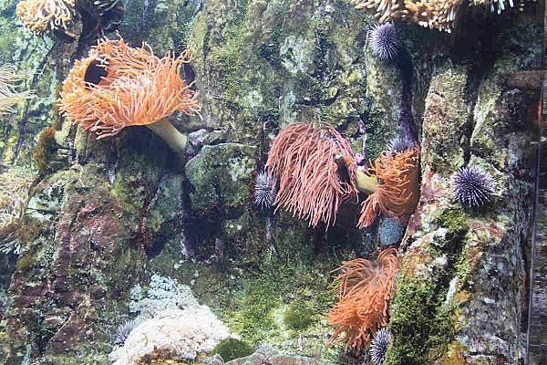 fond marin aquariumLR35