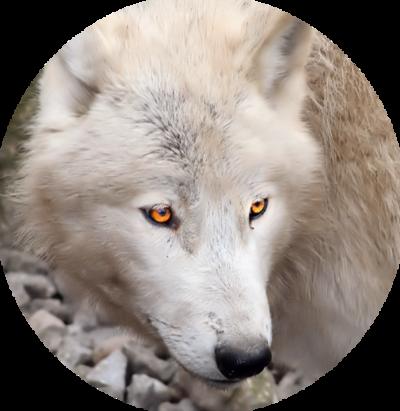 loups 2
