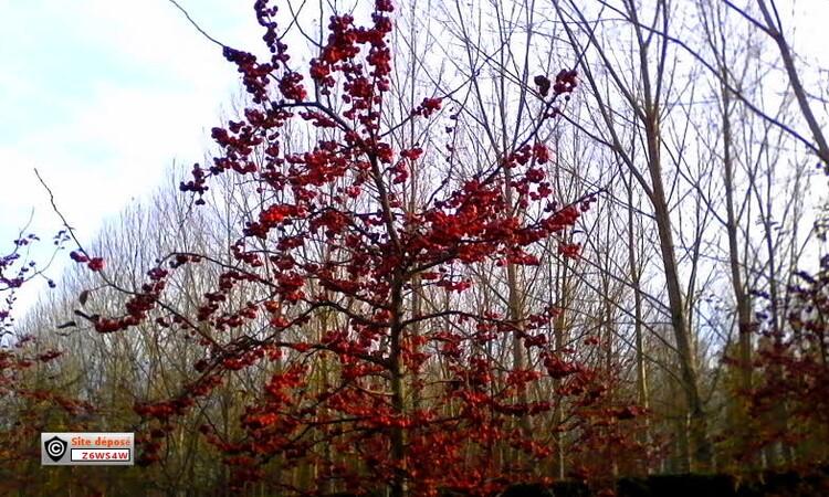 au mois de Décembre juste avant Noël j'ai pris ces arbres en photos ,alors je vous demande le nom ont vas voir si vous êtes de bons élèves
