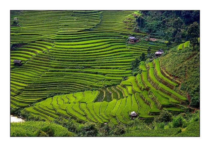 Une rizière par jour 14