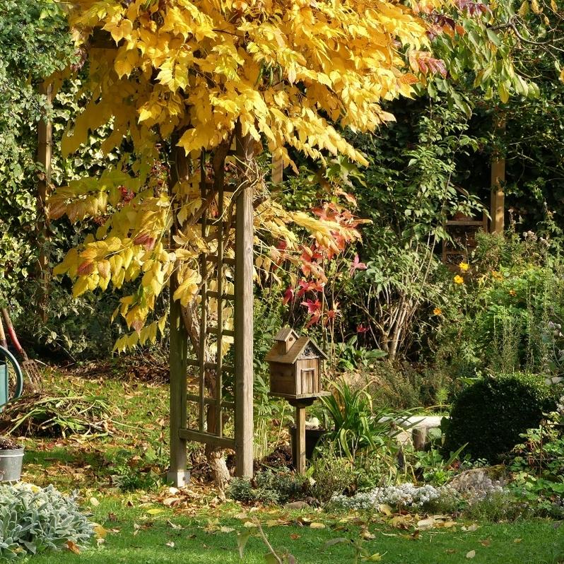 Journées des plantes d'automne de Chantilly : mon butin ou quand le Chat Vert se lâche...