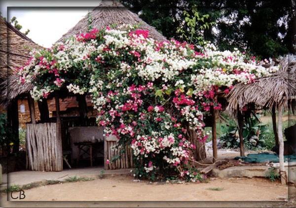 Kenya case fleurie