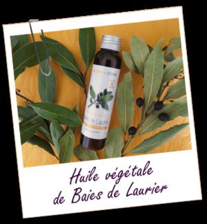 Vertus médicinales des plantes sauvages : Laurier d'Apollon