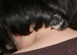 hirondelle-nichee-dans-mes-cheveux.jpg