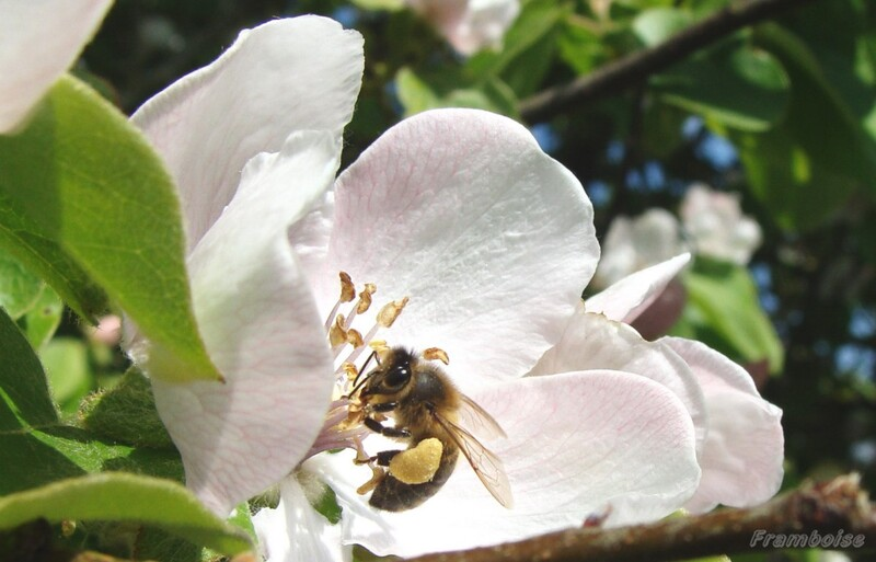 Les abeilles s'invitent pour un tour de carrousel à Pornic