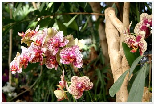 Mille et Une Orchidées. Jardin des plantes Paris.